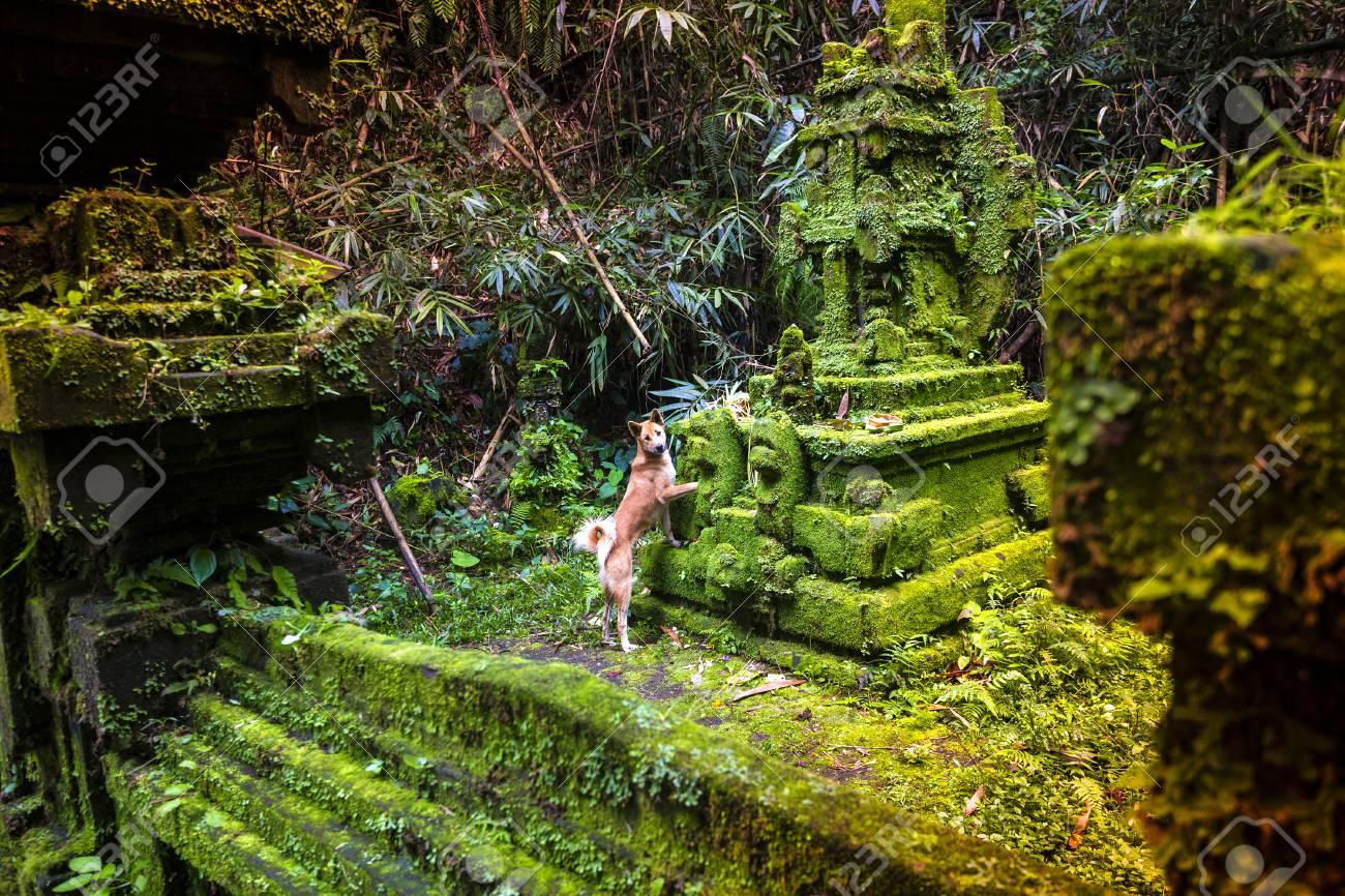 Traditional Hindu Bali Temple In Jungle Near Ubud Indonesia Stock