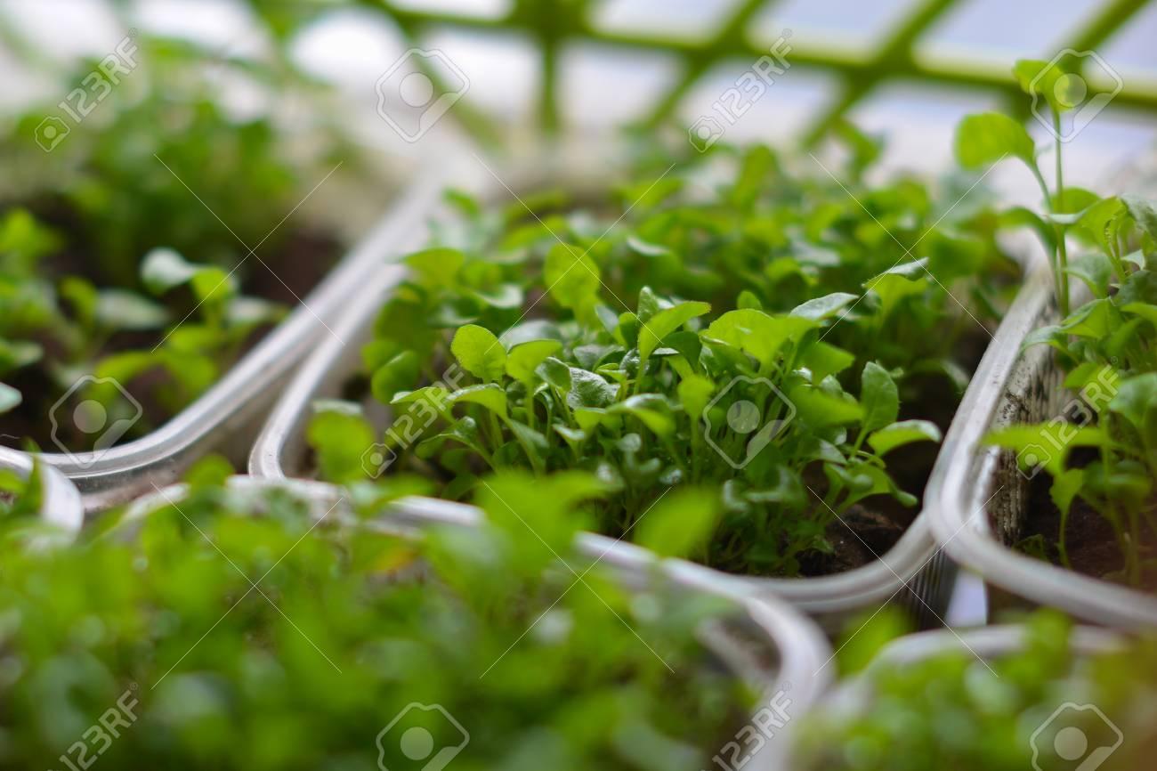 little green seedlings growing in pot plants and gardening stock