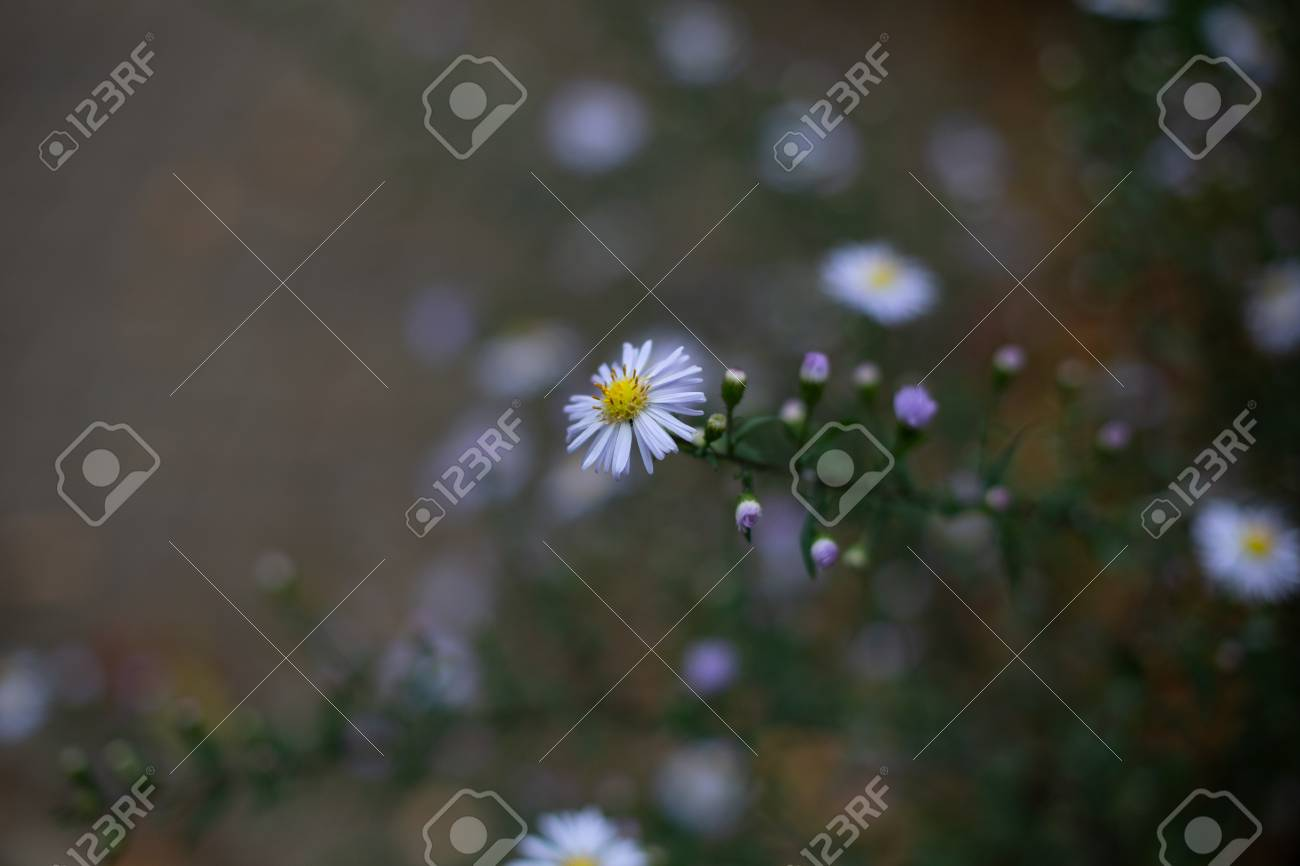 Small blooming flower of daisy on green stem growing on bush - 121884358
