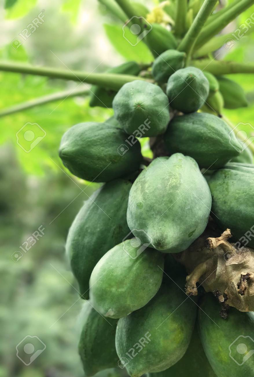 Pictures Of Papaya Fruits
