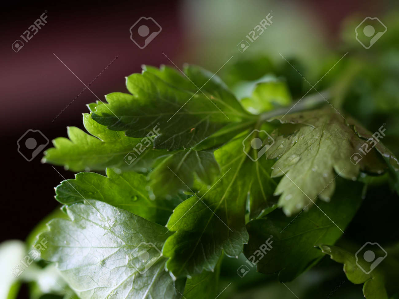 Parsley healthy foods from the garden, vitamin salads, fresh herbs - 166924820