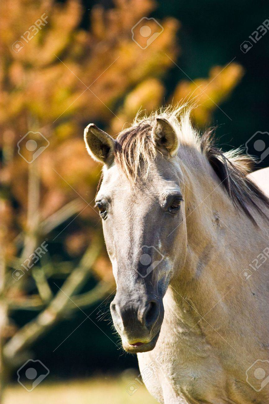 White horse eating grass in a meadow, its head down. Stock Photo - 5489843