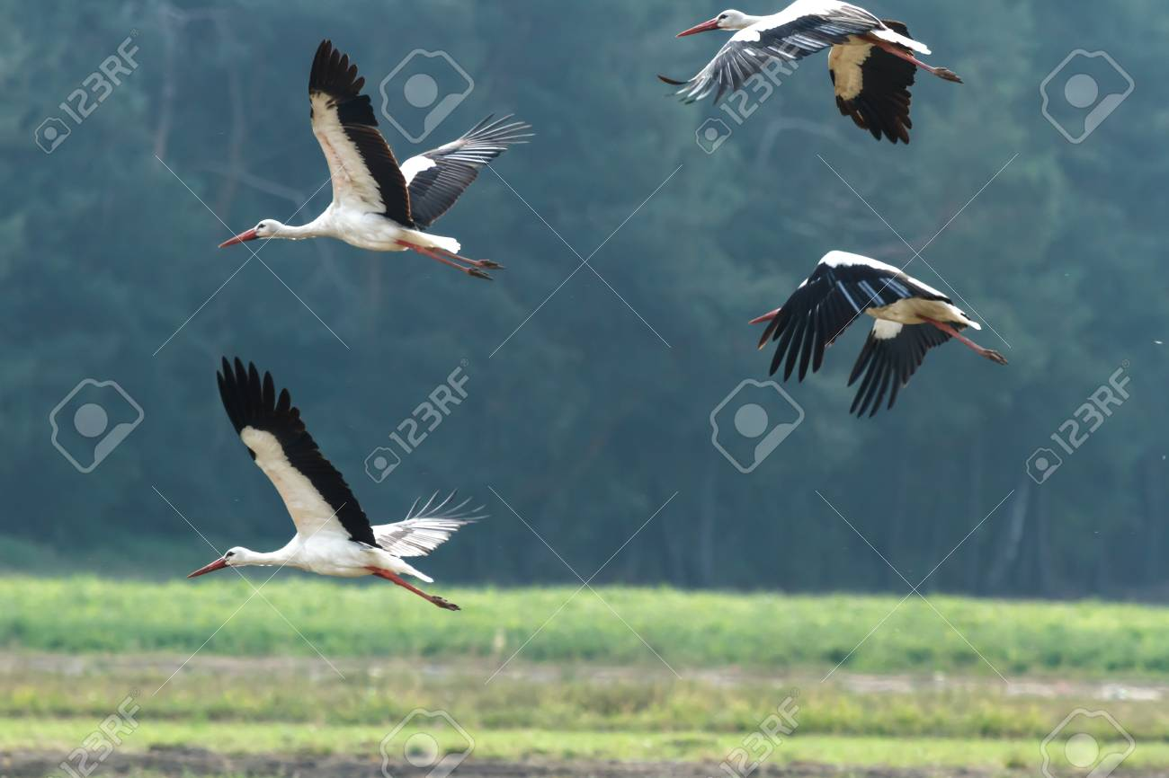 many birds flying in the sky, nature series Stock Photo - 14931862