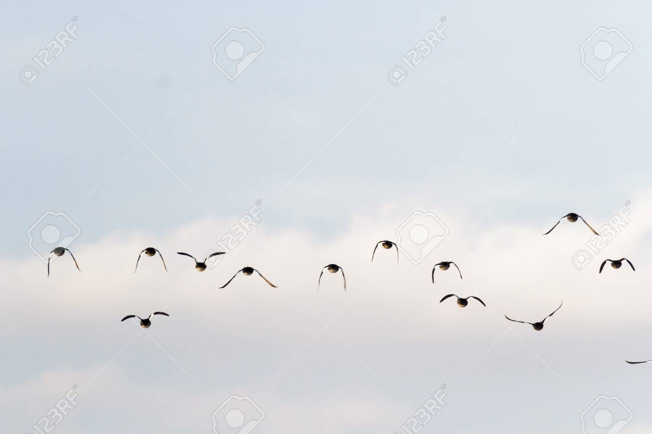many birds flying in the sky, nature series - 16608027