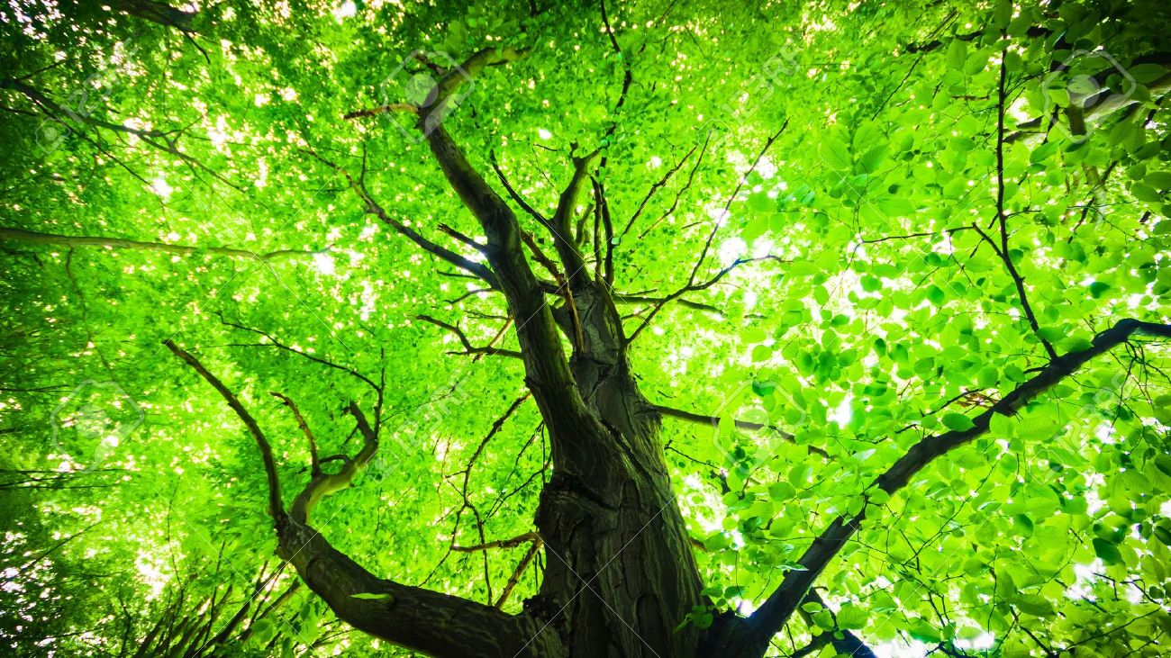 Old Big Tree On Color Background With Blue Sky Stock Photo, Picture ...