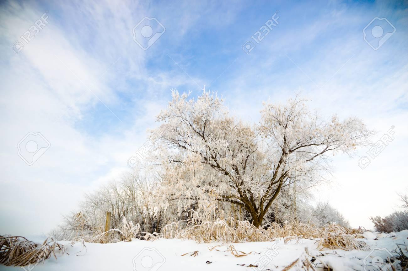 Grande Y Viejo árbol Congelado En El Fondo De Color Con Cielo Azul ...