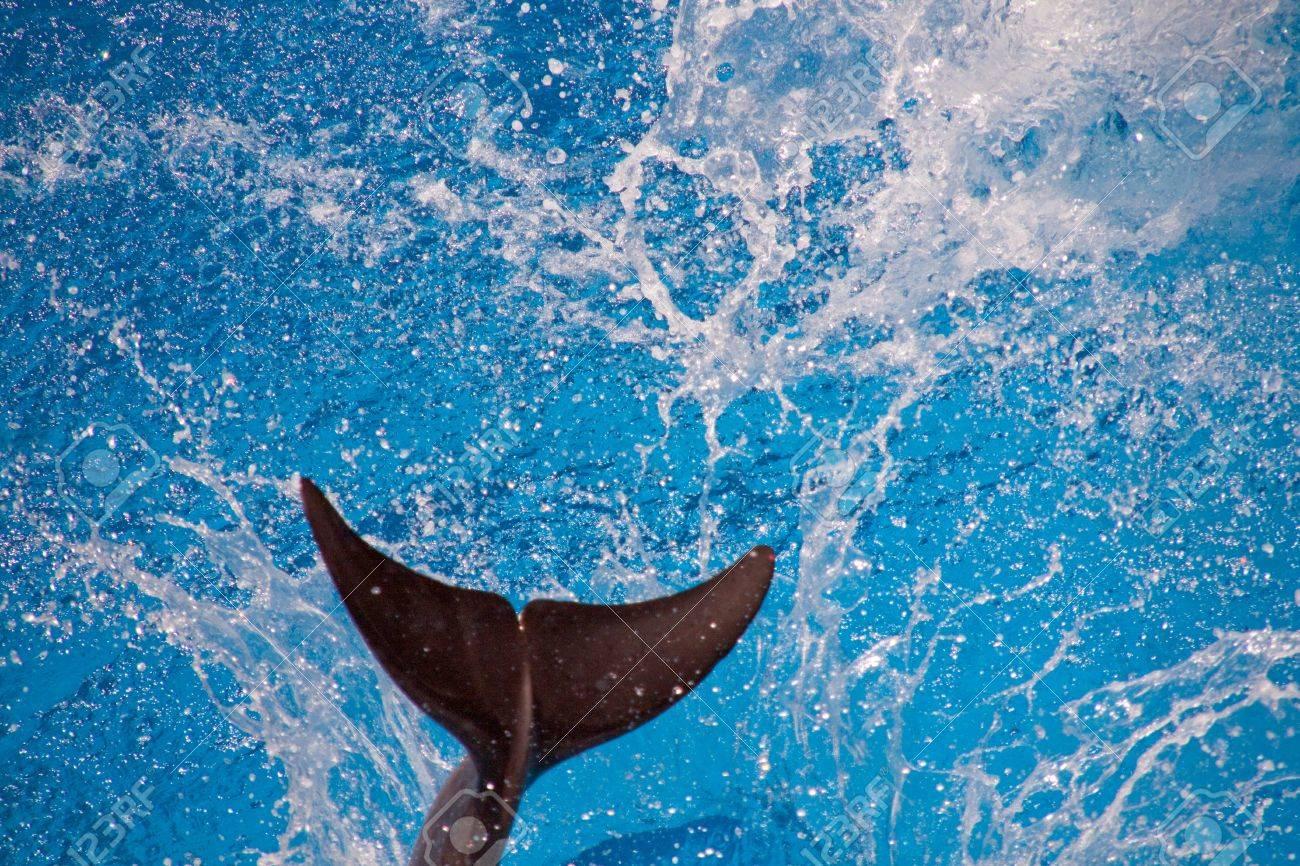 を した イルカ なく しっぽ 【感想・ネタバレ】しっぽをなくしたイルカ 沖縄美ら海水族館フジの物語のレビュー