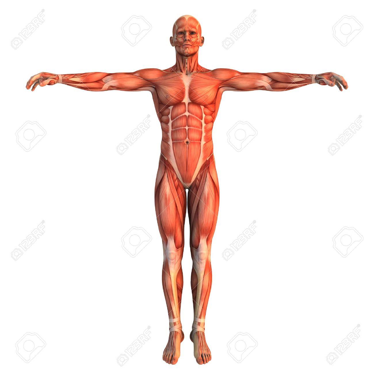 cuerpo humano - Mapa Mental - Amostra