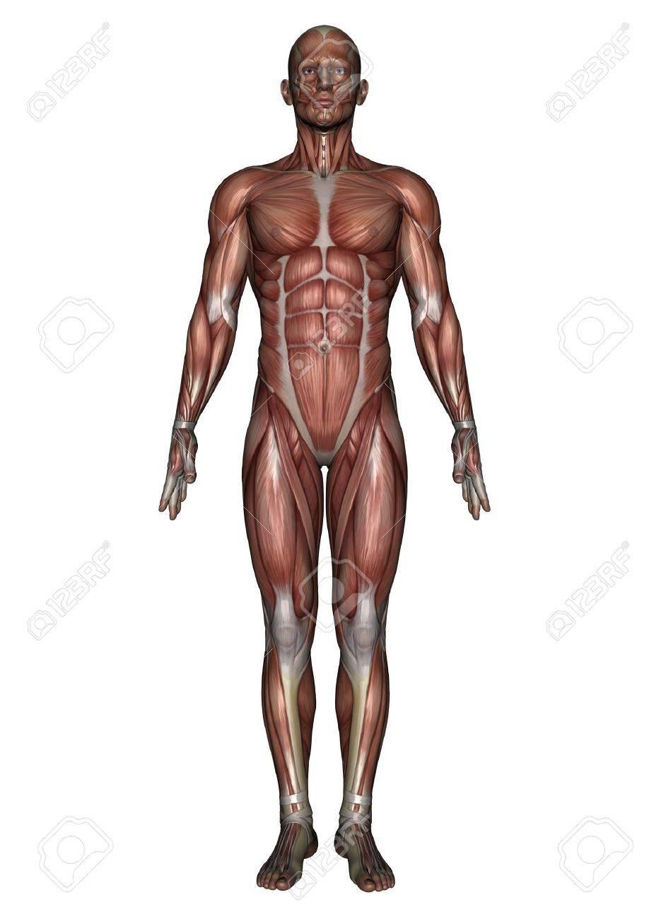 male lay figure Stock Photo - 9640115