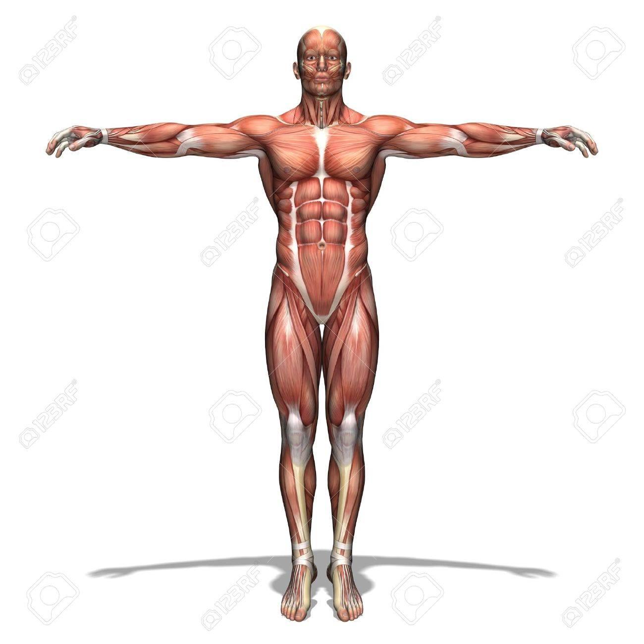 human body Stock Photo - 13385760