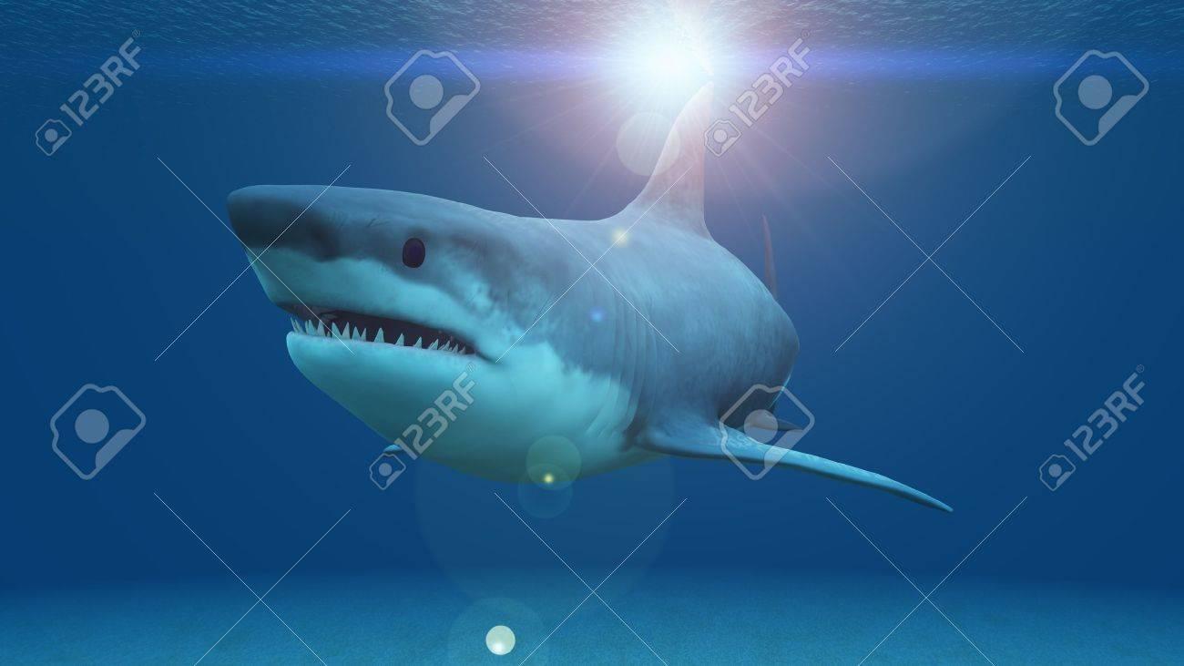 shark - 20081585