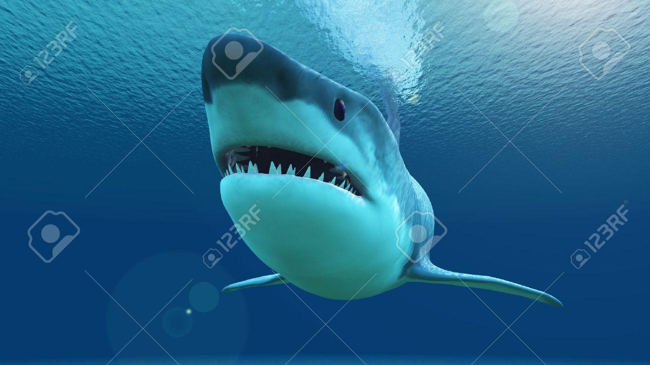 shark - 20081593