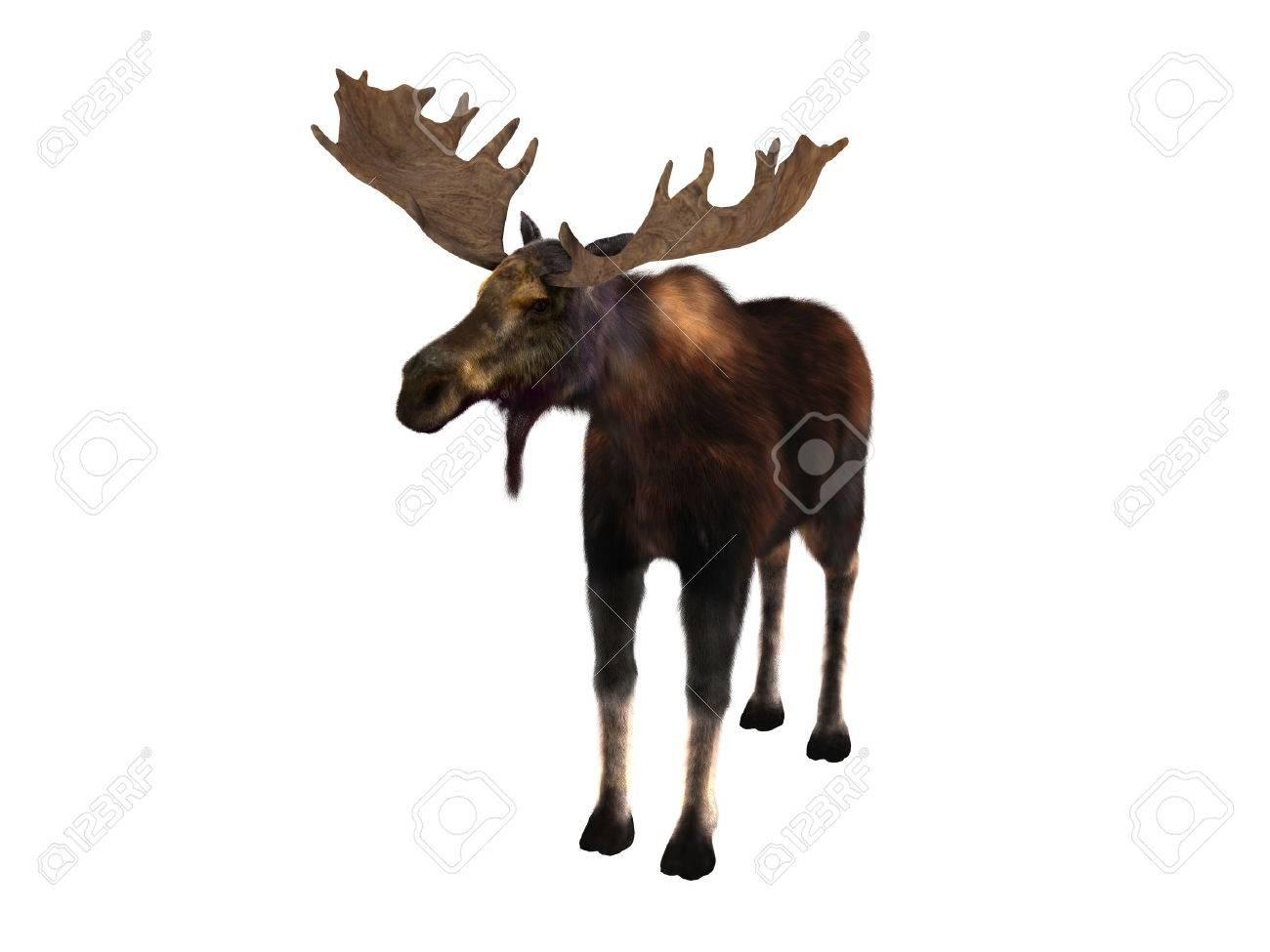 moose - 30398516