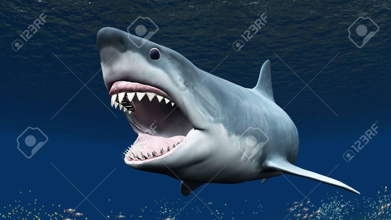 shark - 35218868