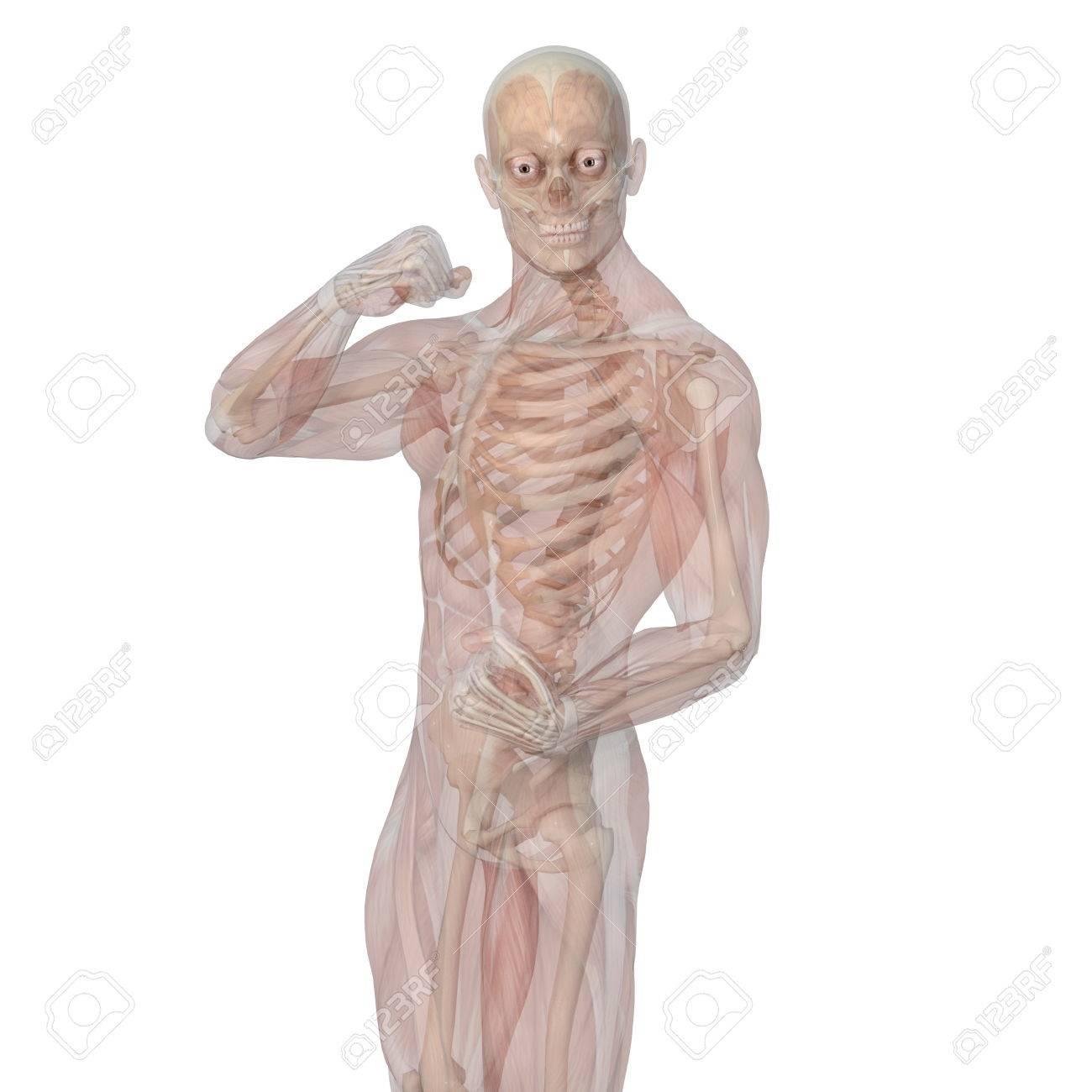 Ungewöhnlich Sichtbare Körper 3d Menschlicher Anatomie Atlas Galerie ...