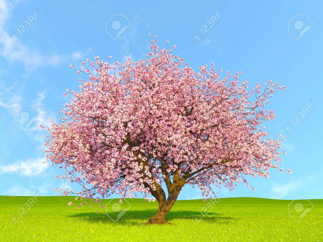 cherry tree - 69281534