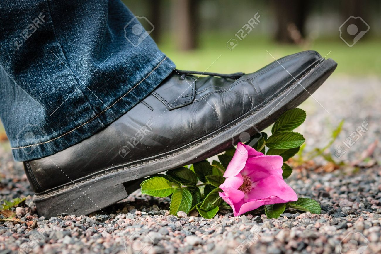 Man crushes a rose by stepping on it Stock Photo - 16298953