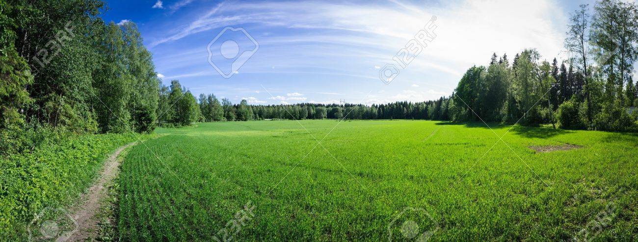 Panoramic view of a summer field in Finland Stock Photo - 18283366