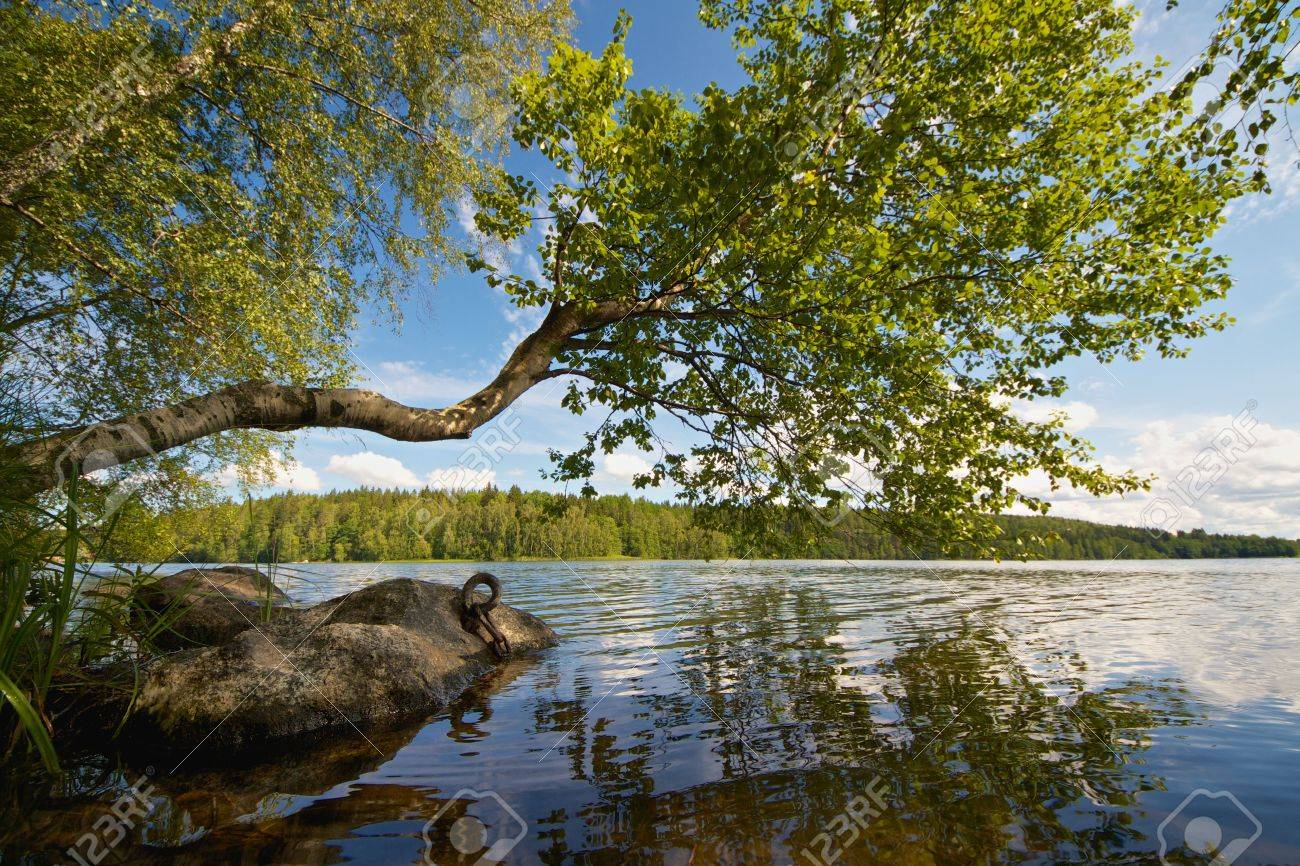 Beautiful summer day on a lake in Finland with a tree reaching above the water Stock Photo - 19462291