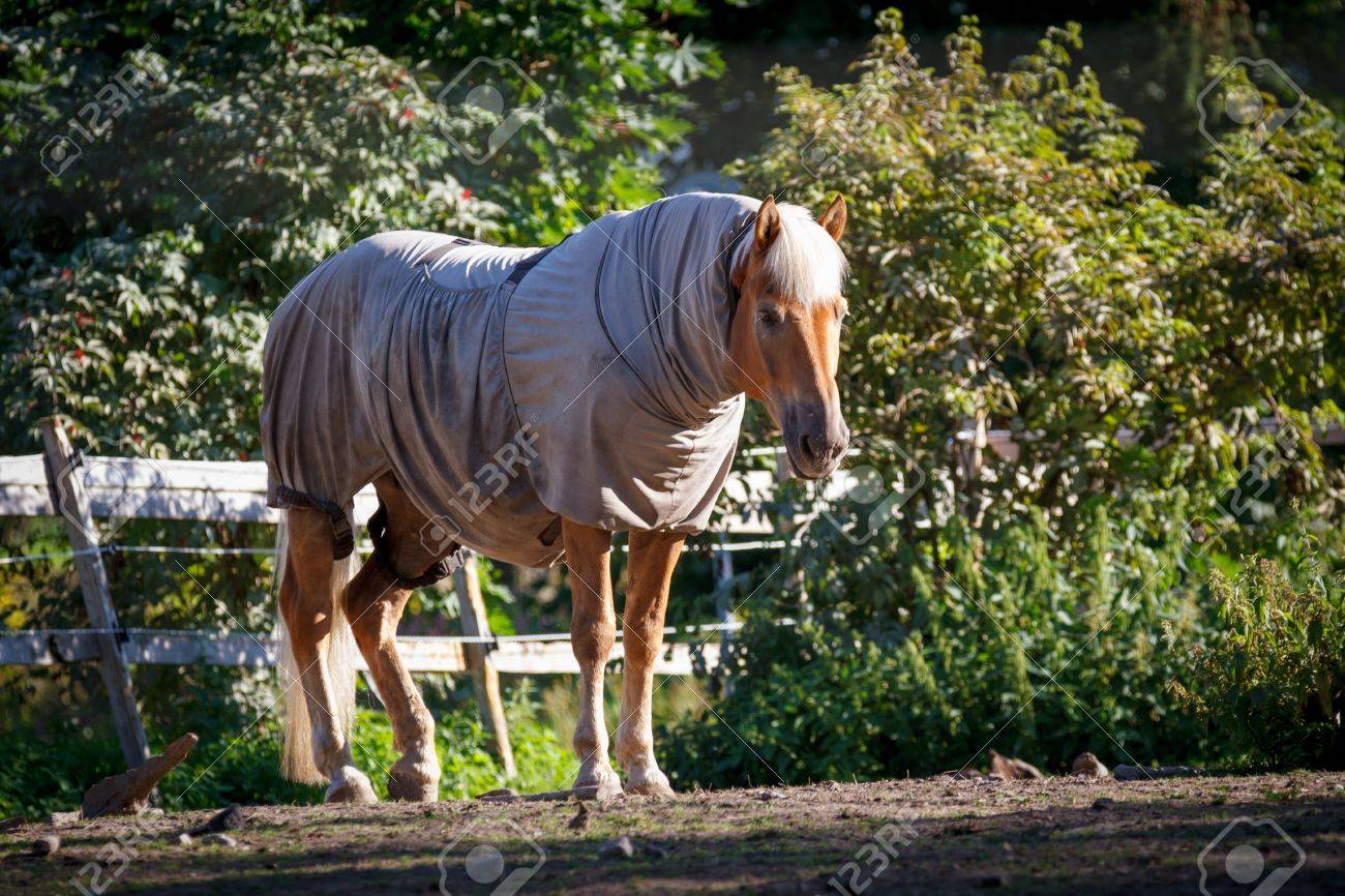 Horse clad in the warp and standing behind a fence Stock Photo - 22005148