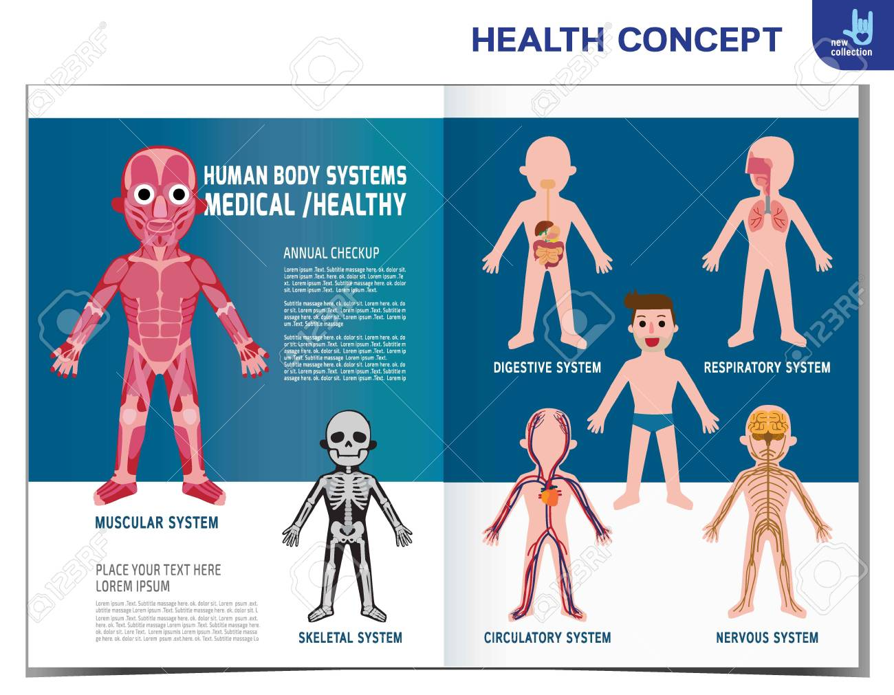 Human Body Systems Anatomy Organ Muscular Skeletal Circulatory