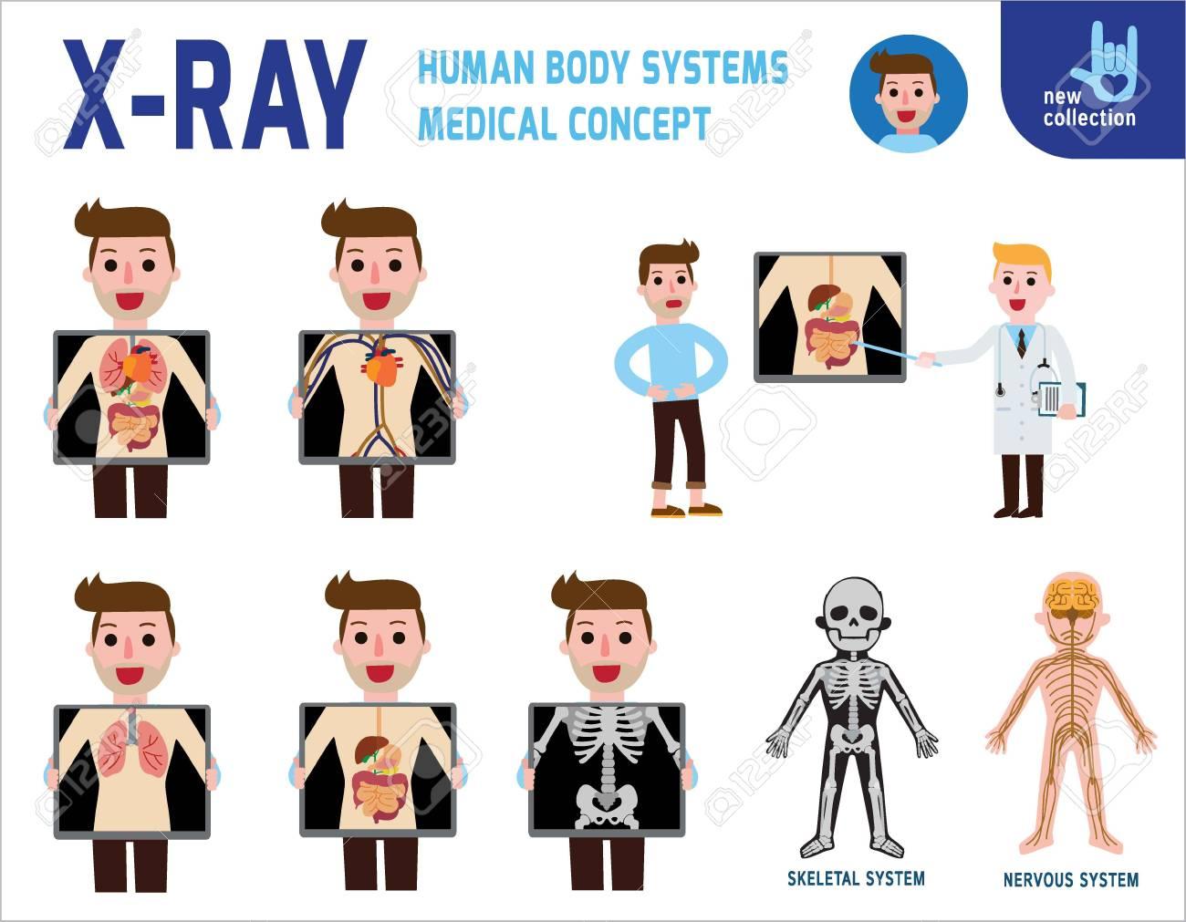 Pantalla De Rayos X Que Muestra Los órganos Internos Y Los Sistemas ...