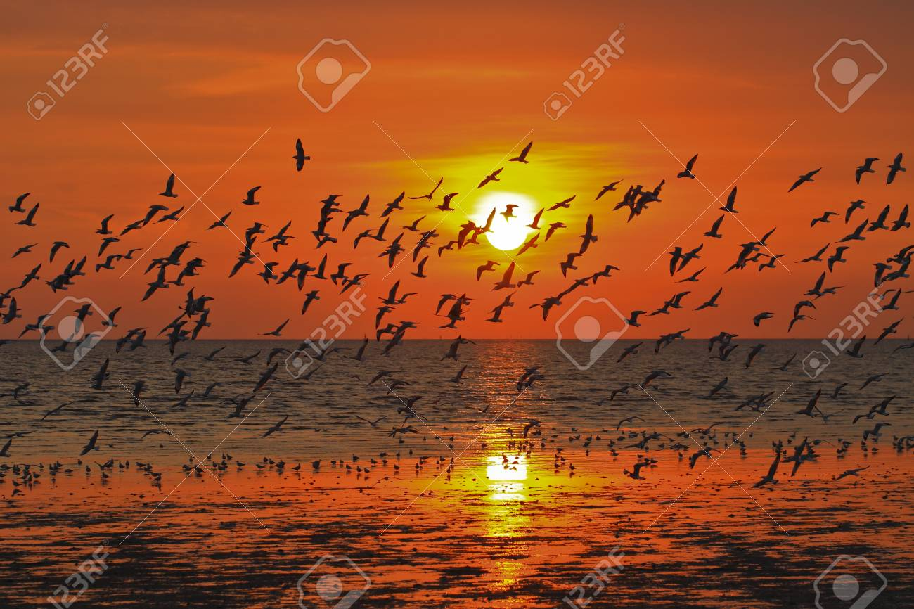 Many seagulls flying themselves in the sunset Stock Photo - 17110753