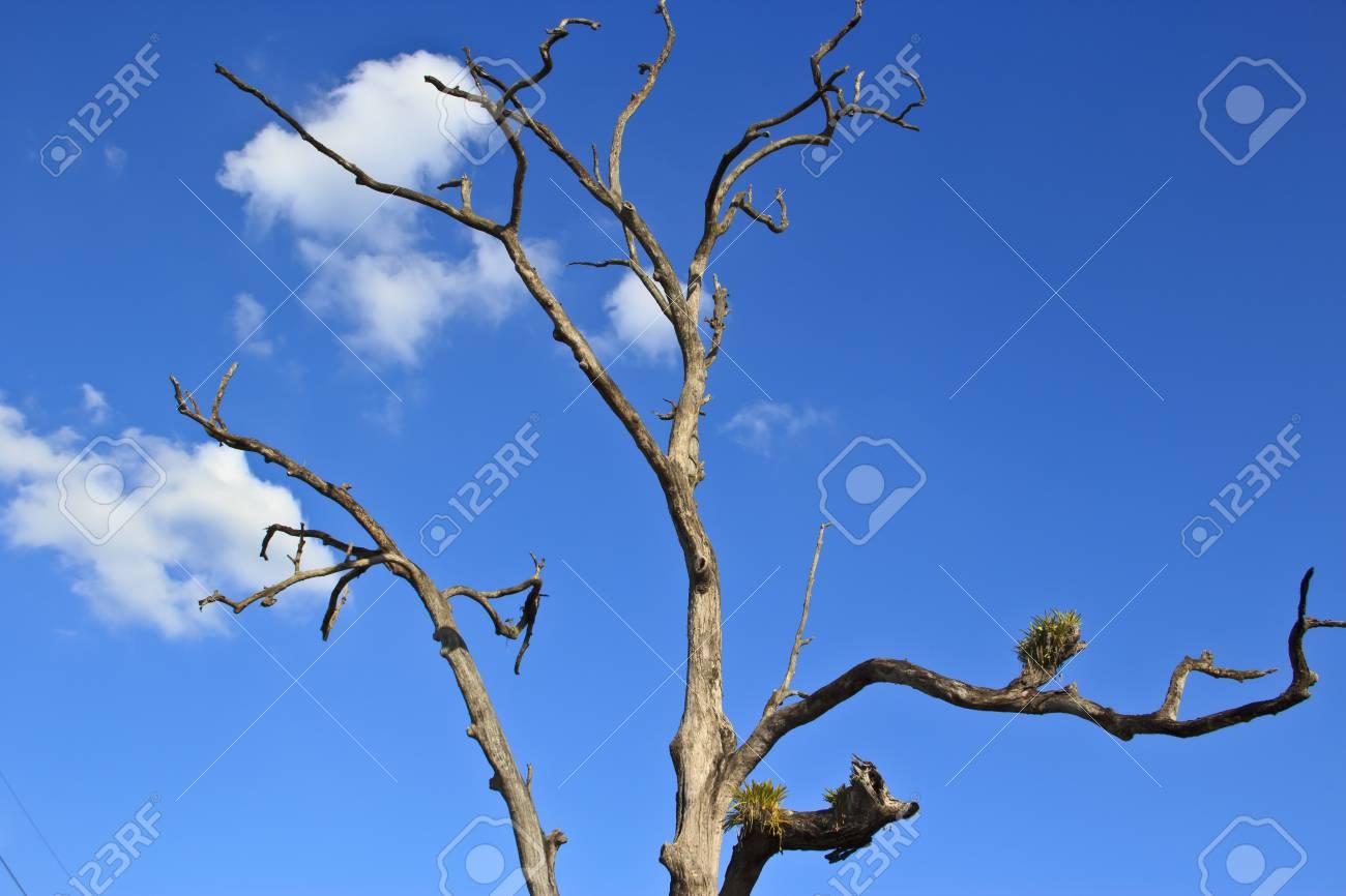 dead tree Stock Photo - 17109765