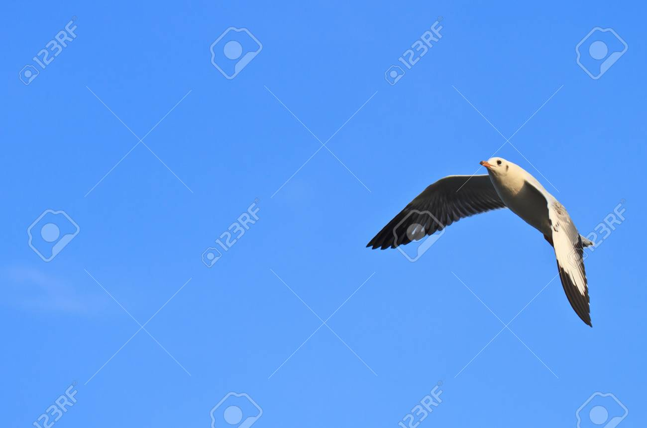 Blue Sky and seagull Stock Photo - 17109701
