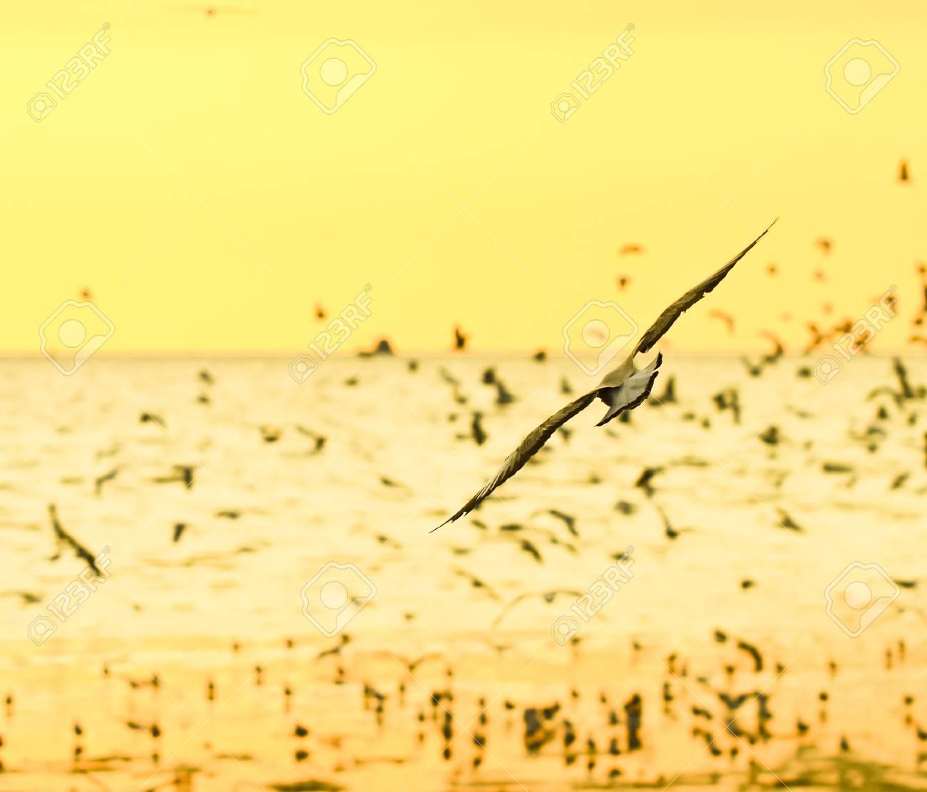 group Of seagull birds flying over sunset Stock Photo - 17964068