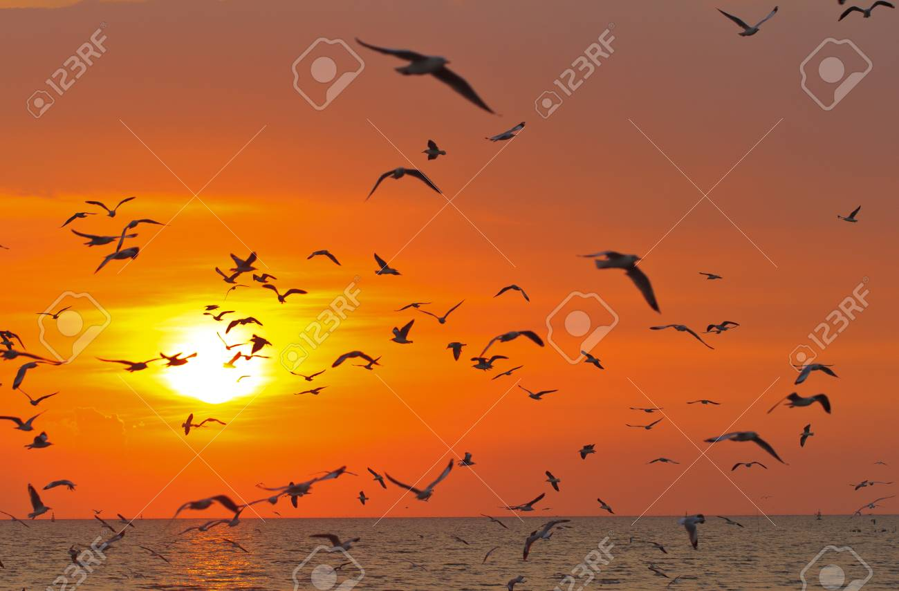 Silhouetted Group Of seagull birds flying over sunset Stock Photo - 17964080