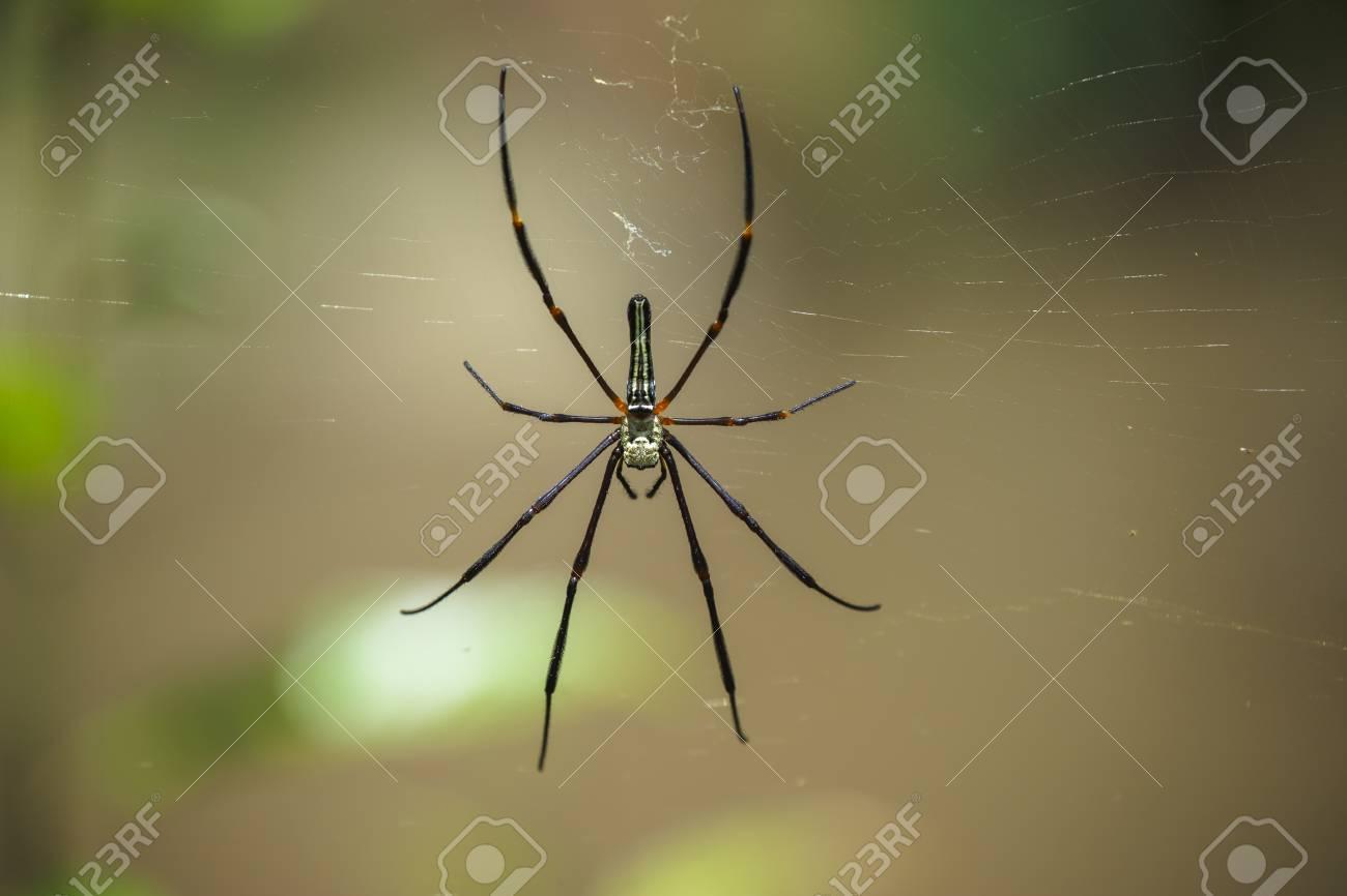 Macro Spider in the wild , thailand Stock Photo - 22442829
