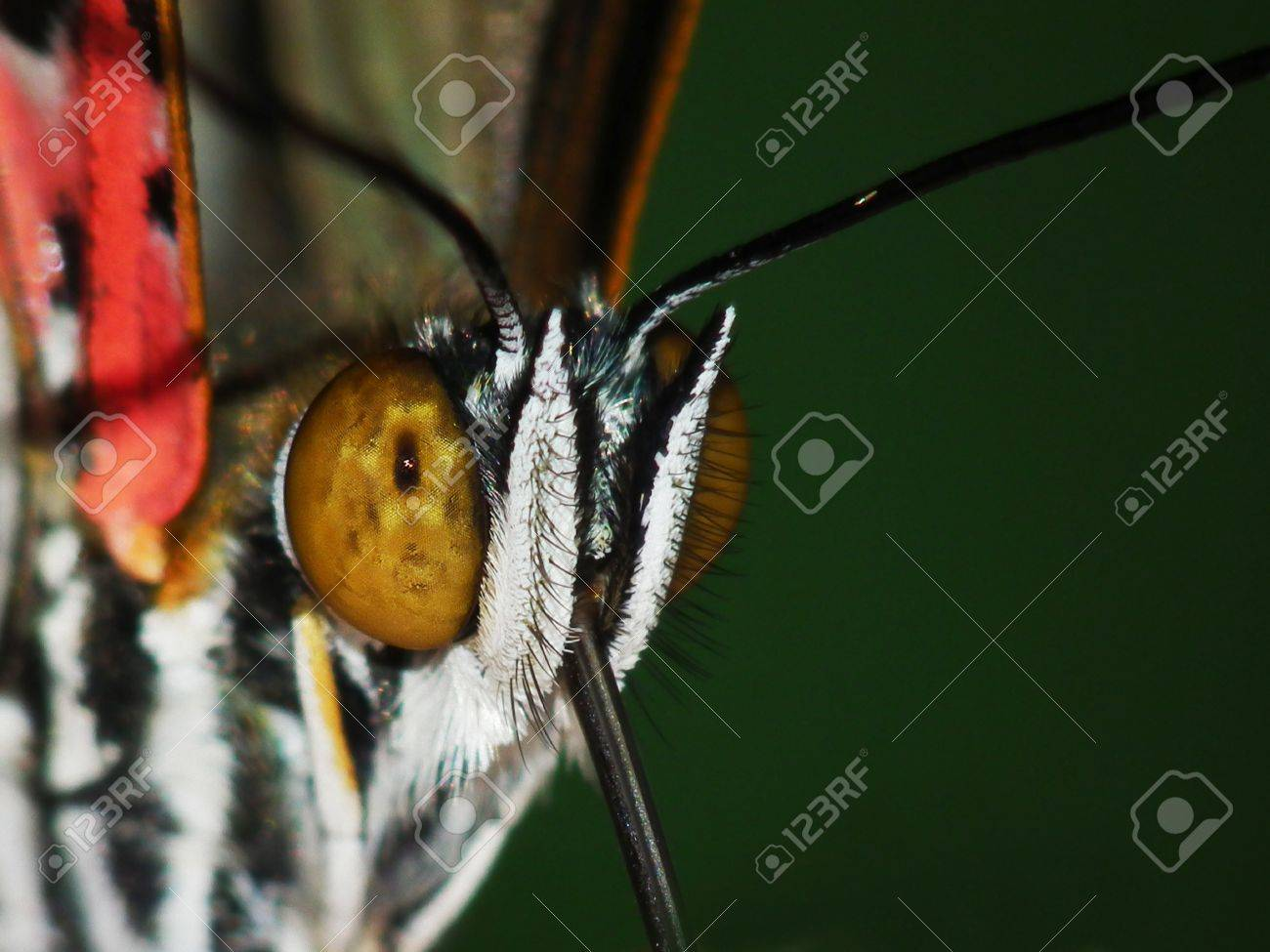a portrait of a butterfly Stock Photo - 12718993