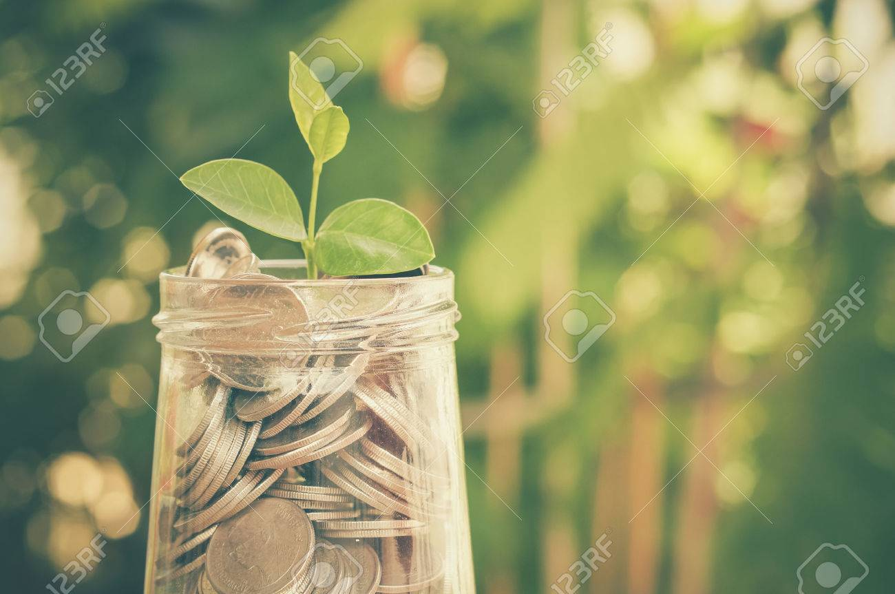 plant growing out of coins with filter effect retro vintage style Stock Photo - 41935256