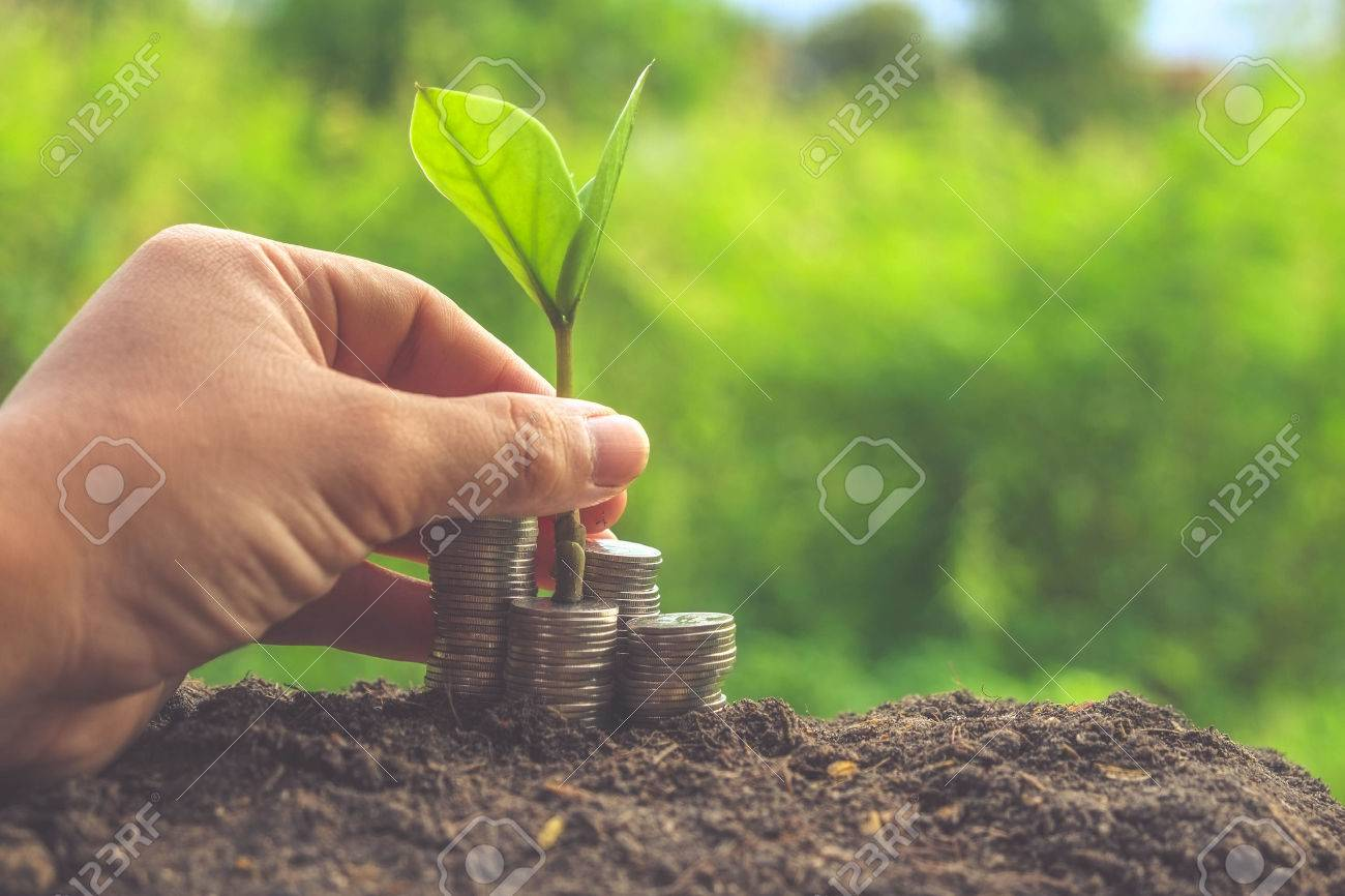Money and plant with hand with filter effect retro vintage style Stock Photo - 43788113