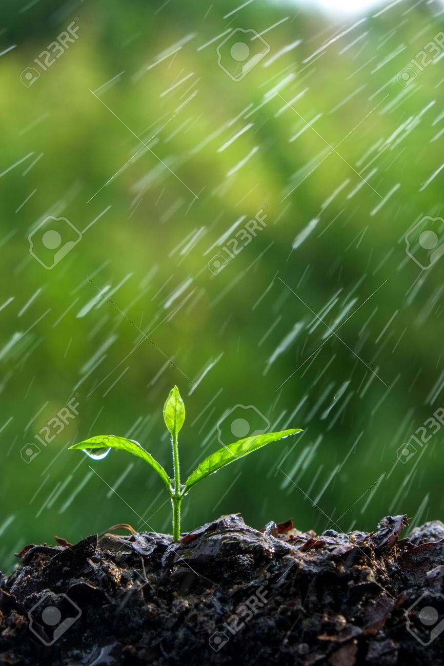 Green sprouts in the rain Stock Photo - 45249783
