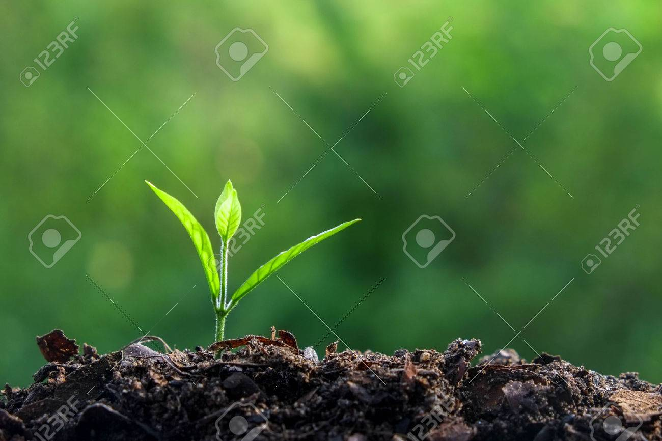Young plant Stock Photo - 45249835
