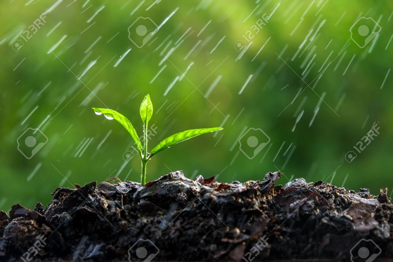 Green sprouts in the rain Stock Photo - 45870077