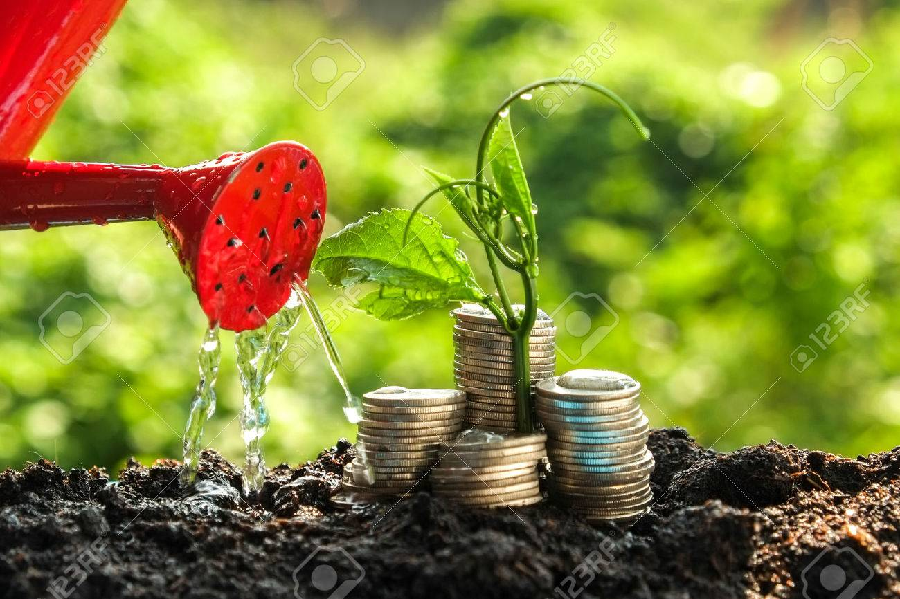 Money growth concept plant growing out of coins Stock Photo - 47356664