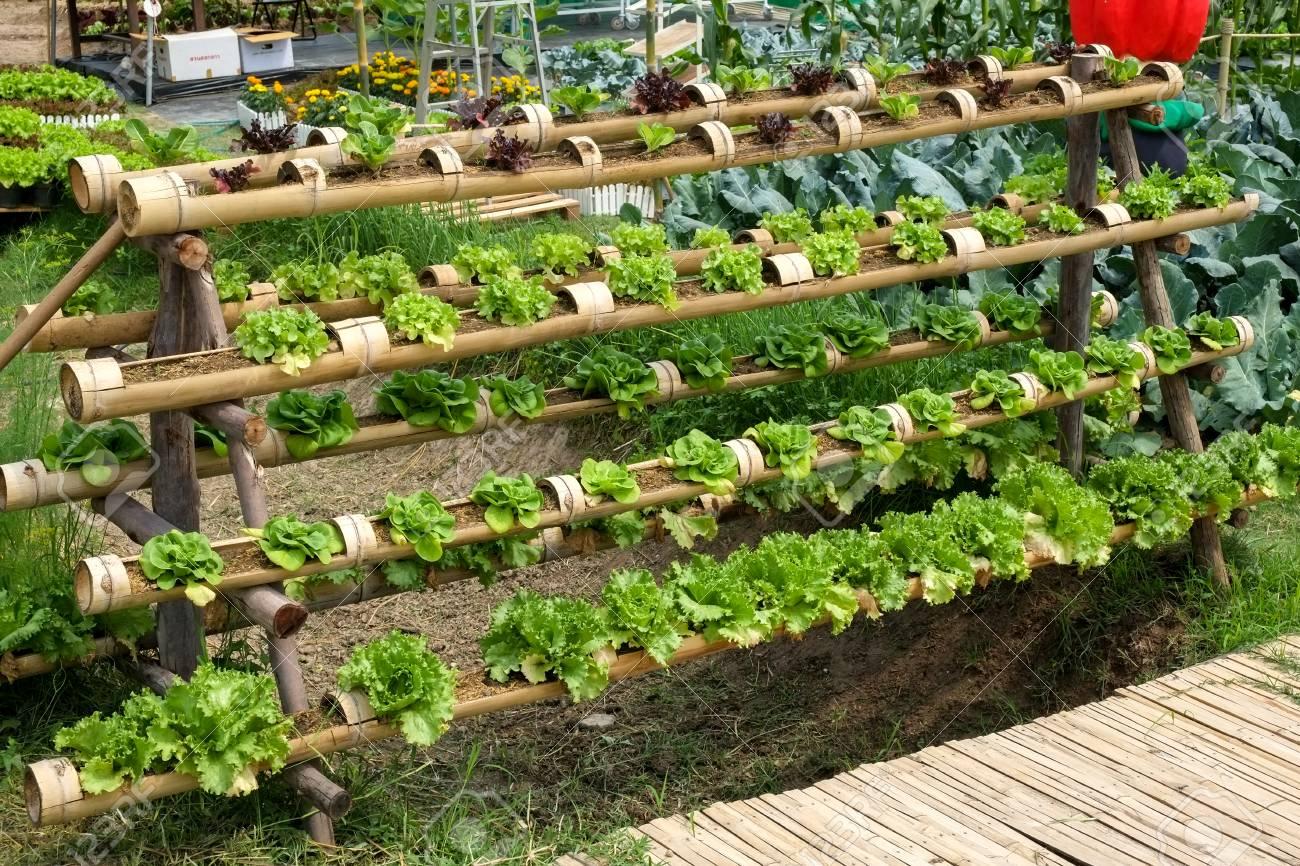 Legumes Dans La Decoration Idee De Jardin Vertical Dans La Ville