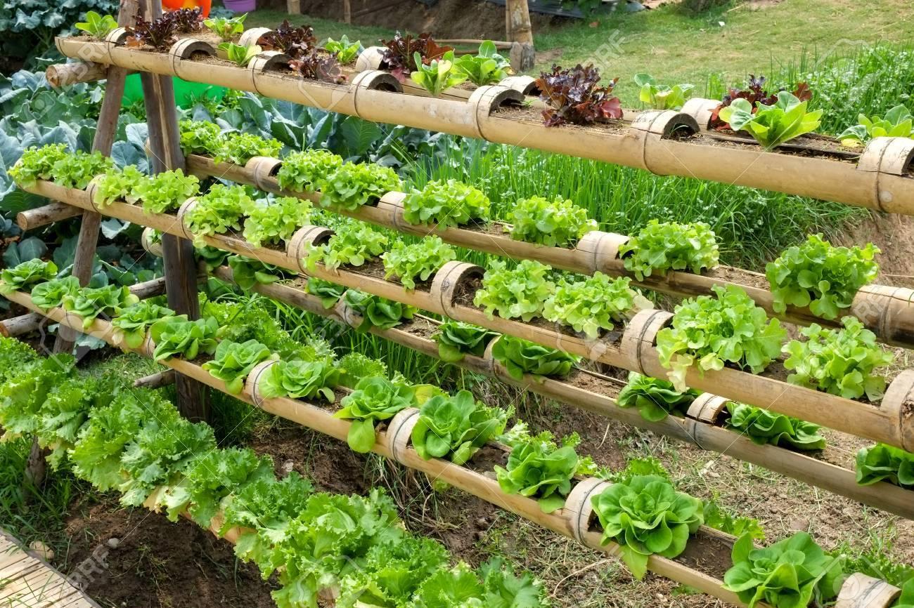 Gemüse In Dekoriert Vertikalen Garten Idee In Der Stadt Lizenzfreie