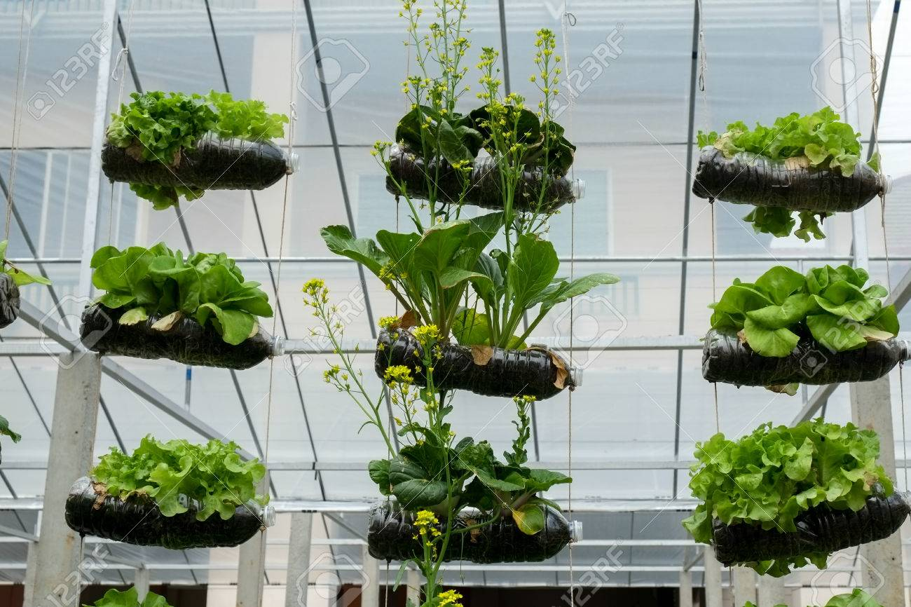 Vegetable In Decorated Vertical Garden Idea In The City Stock Photo ...