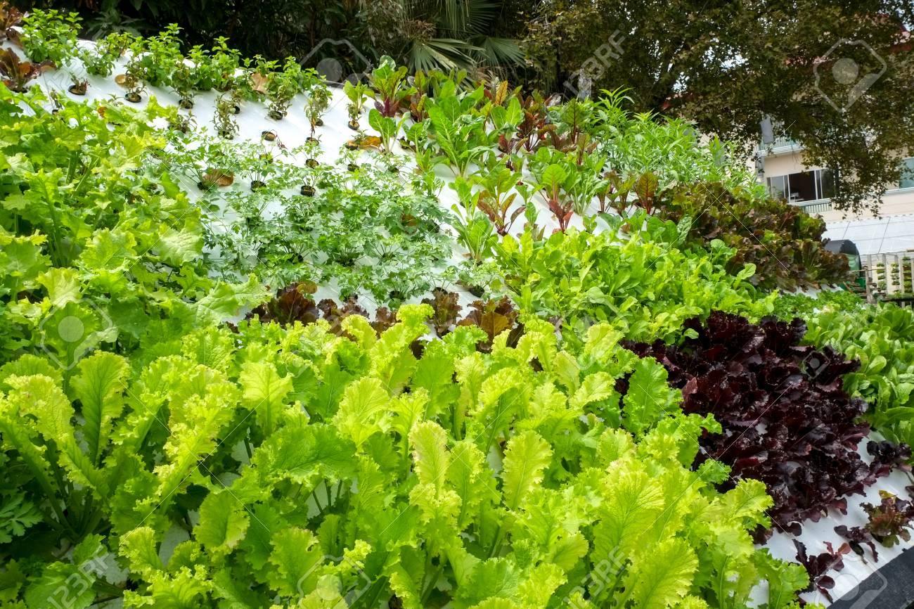 Gemüse In Geschmückten Vertikalen Garten Idee In Der Stadt