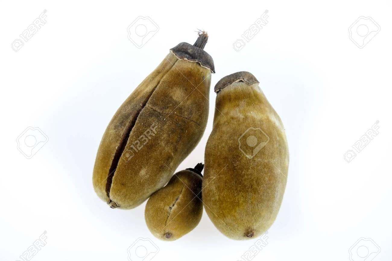 Baobab Frucht Auf Einem Weissen Hintergrund Lizenzfreie Fotos Bilder