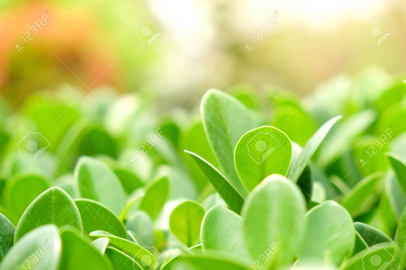 Natural Green Plants Background Or Wallpaper Nature View Of Stock Photo Picture And Royalty Free Image Image 99159409
