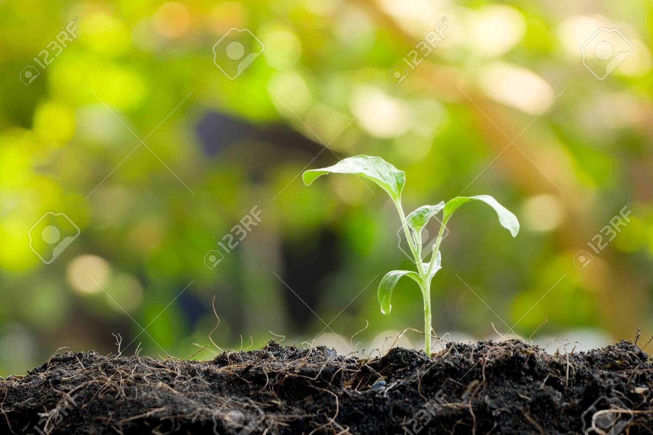 Green sprout growing from seed in organic soil - 123942616