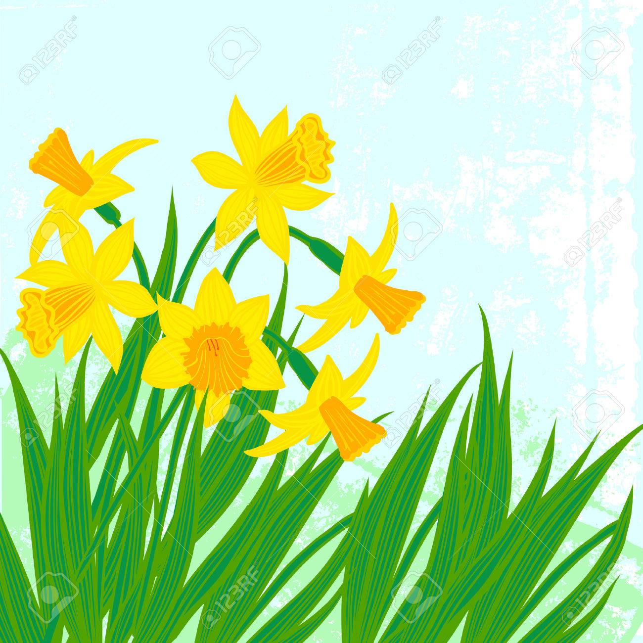 vector card with daffodils on textured background template for