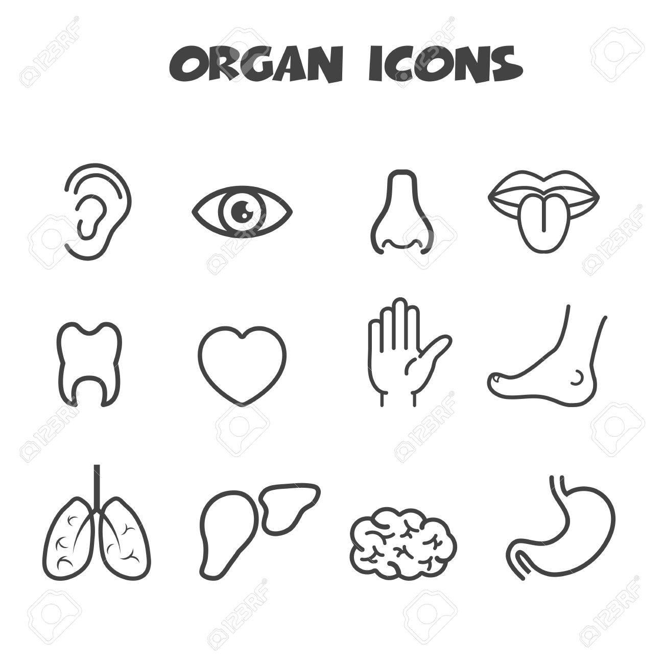 organ icons, mono vector symbols Stock Vector - 24941844