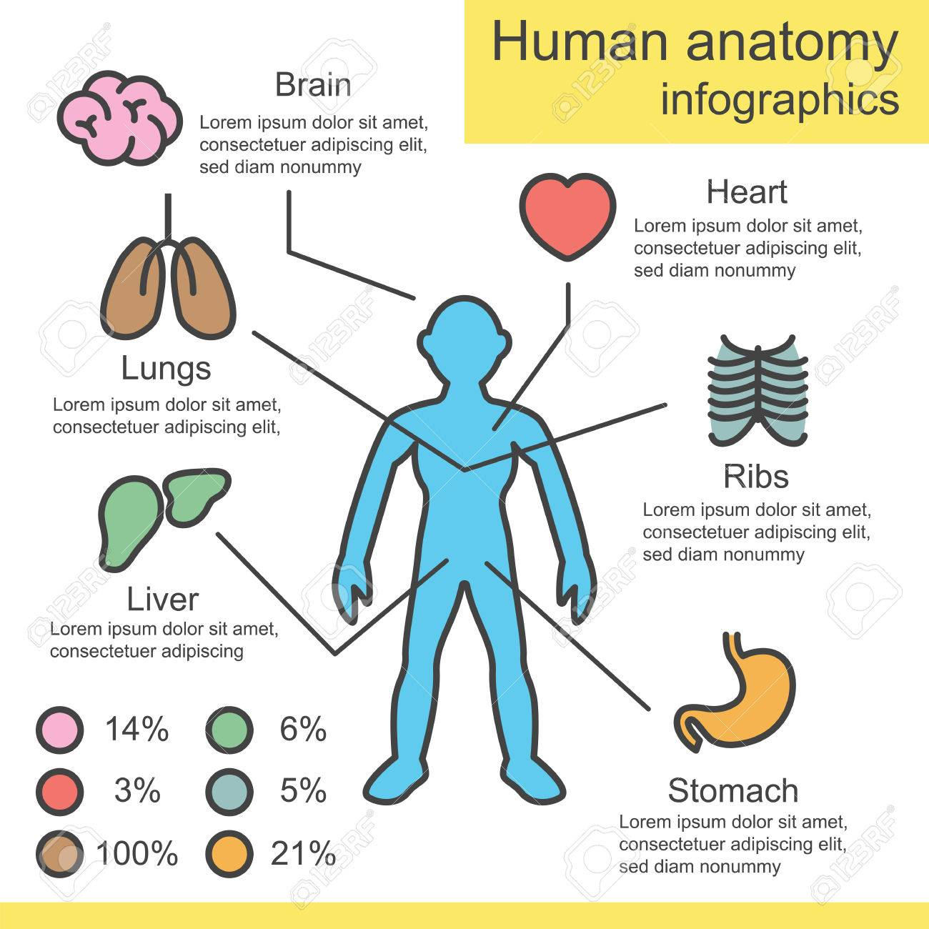 Infografía Esquema Anatomía Humana, Diseño Del Vector Ilustraciones ...
