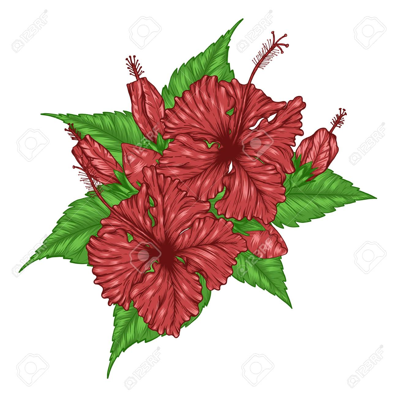 Hibiscus Flower Vector By Hand Drawing Beautiful Flower On White